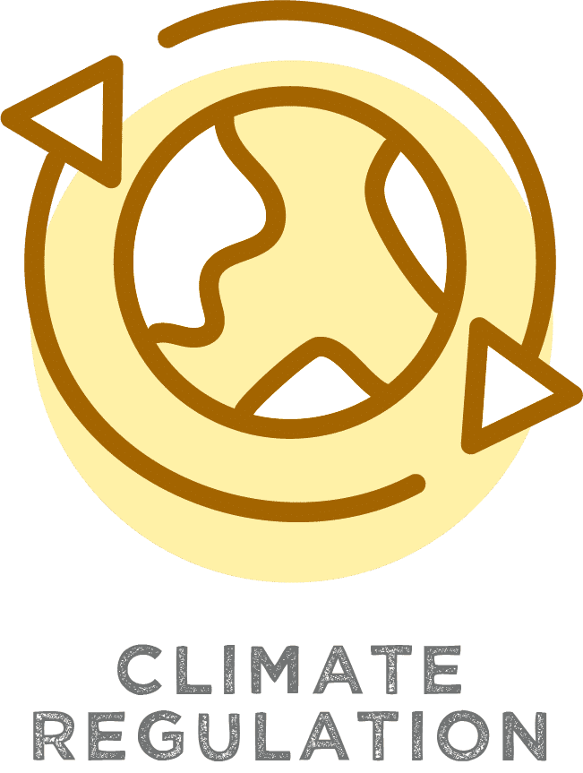 Plant Trees for Climate